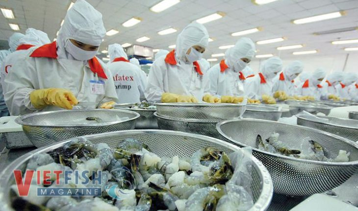The shrimp market is contrary to forecast by experts