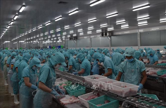 (Tiếng Việt) Đồng Tháp helps fish exporters amid lower demand during COVID-19