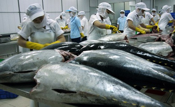 (Tiếng Việt) Tuna exports to Italy soar
