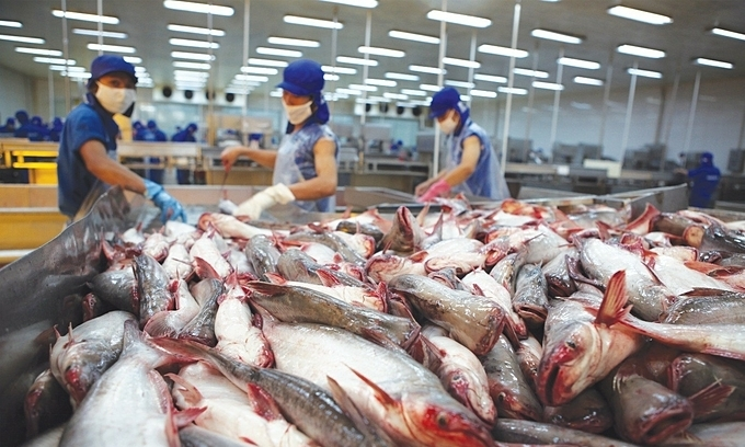 Pangasius exports to US continue to fall