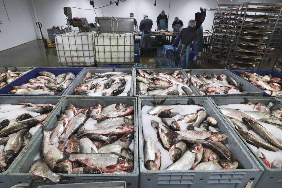 Asian carp roundup opens new front in battle